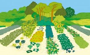 agroecologia-souza